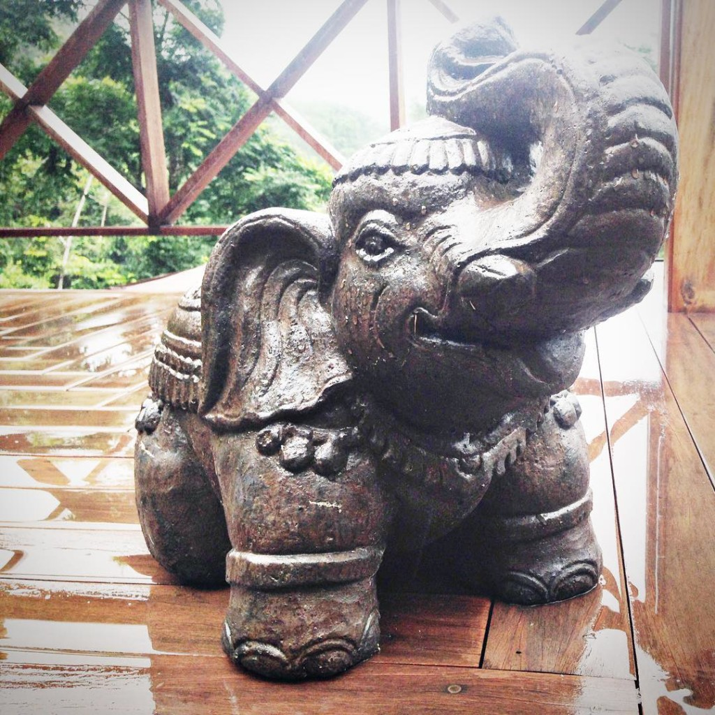 I have such a soft spot for elephants