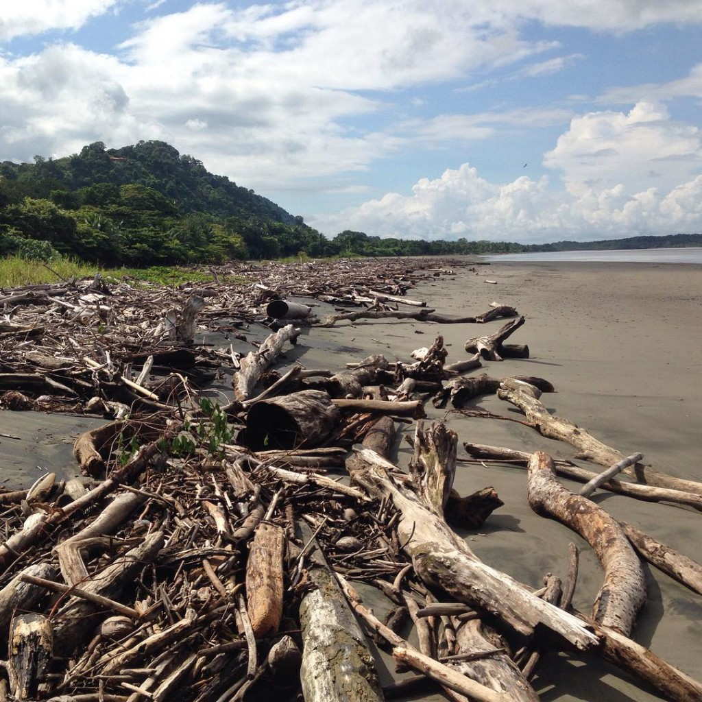 Just a wee bit of driftwood on Playa Tortuga costaricahellip
