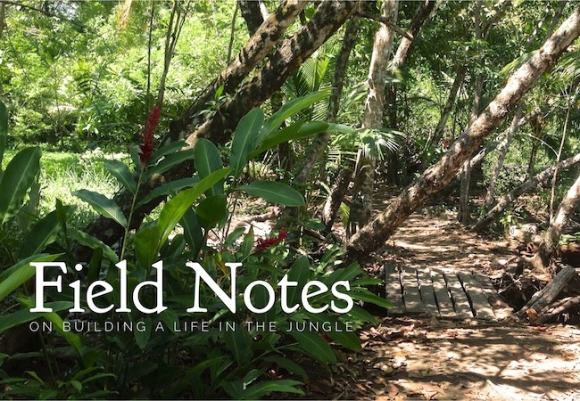 field notes on building a life in the jungle
